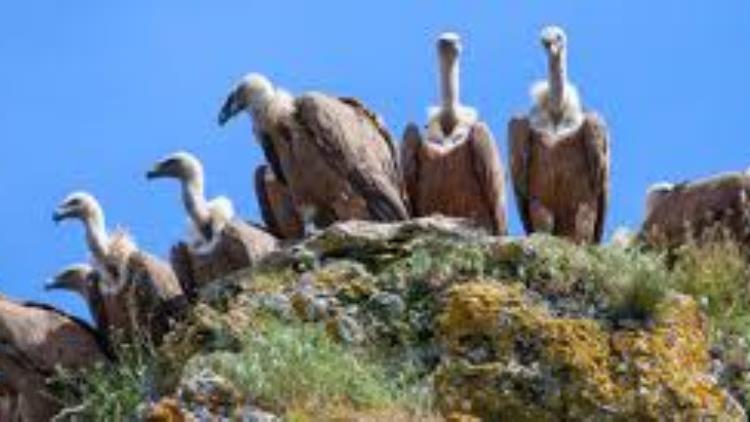 17-les vautours