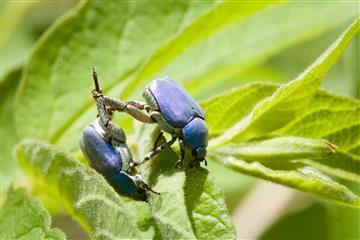 FMA Insecte-Alain-Lagrave