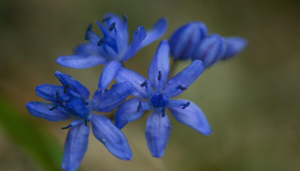 Flore en Margeride