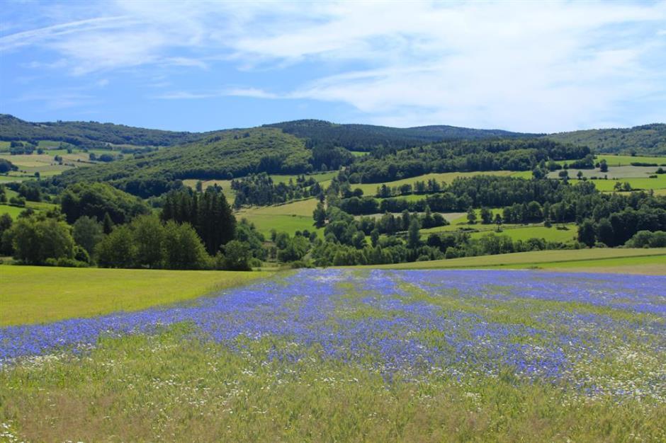 S Monts-de-la-Margeride