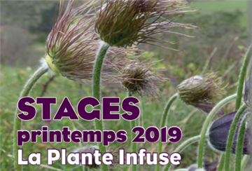 plante infuse 2019